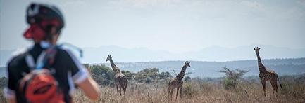 Tanzania Classic Dag 6 Wildlife Track